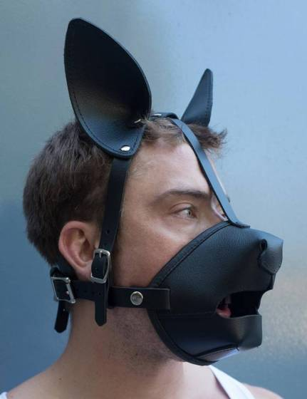 Puppy Dog Eyes. This is the only pup headgear we have found that encourages eye contact and expressive exchange